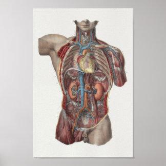 Impresión 1867 de la anatomía del vintage de los