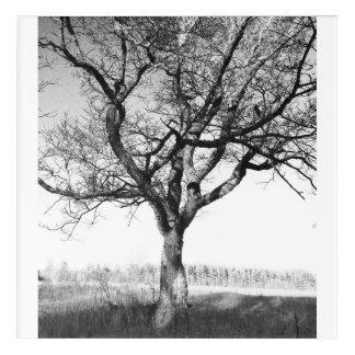 Impresión Acrílica Árbol viejo hermoso en el Lake Placid NY