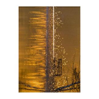 Impresión Acrílica Banco solo por el lago en la luz de oro