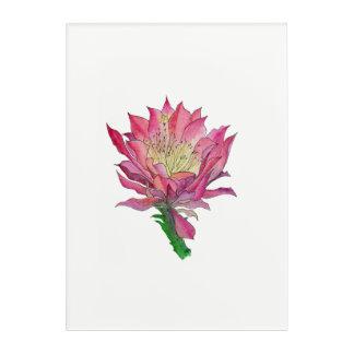 Impresión Acrílica Estampado de flores rosado del cactus de la