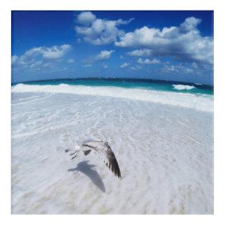 Impresión Acrílica Gaviota del vuelo en la playa