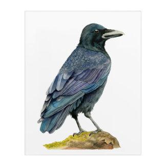 Impresión Acrílica Pintura de la acuarela del cuervo