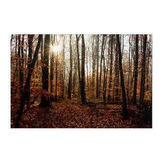 Impresión Acrílica Rayos de sol de la mañana a través del bosque