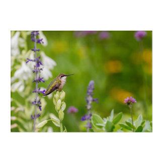 Impresión Acrílica Resto del colibrí