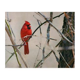 Impresión Acrílica Un pájaro cardinal rojo en una rama en las maderas