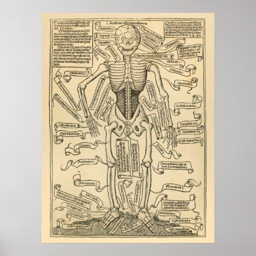 Impresión alemana de la anatomía del vintage de