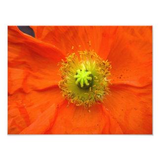 Impresión anaranjada de la foto de la flor de la a