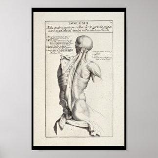 Impresión artística del arte de 1691 músculos