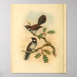 Impresión blanca del vintage del pájaro del