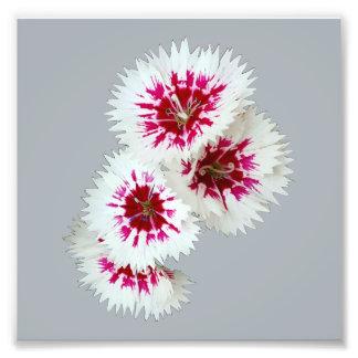 Impresión blanca y púrpura de la foto de la flor