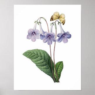 Impresión botánica de las CAMPANAS AZULES