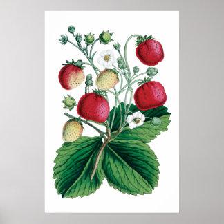 Impresión botánica de las FRESAS