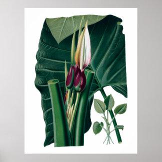 Impresión botánica de las hojas grandes tropicales
