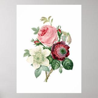 Impresión botánica de los ROSAS originales por