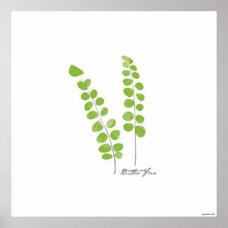 Impresión botánica del helecho del ilustracion el