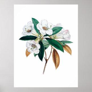 Impresión botánica del rododendro