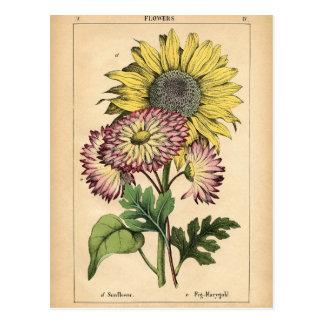 Impresión botánica - girasol y maravilla postal
