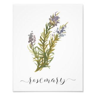 Impresión botánica Rosemary de la hierba de la Foto