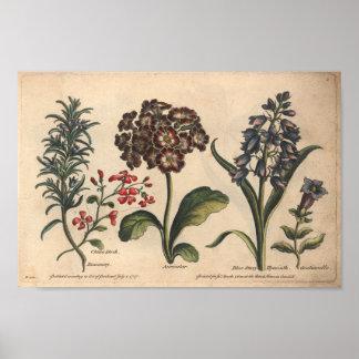 Impresión botánica Rosemary del arte de la flor