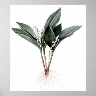 Impresión botánica superior del lirio de los