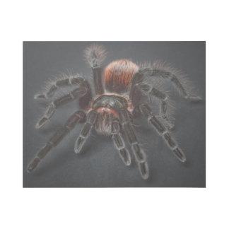 Impresión Con Bastidor Araña melenuda del tarantula