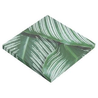 Impresión Con Bastidor Las hojas del verde con blanco rayan el primer