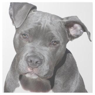 Impresión Con Bastidor Pitbull Terrier americano