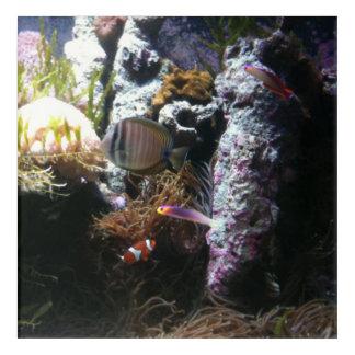 Impresión de acrílico de la vida acuática