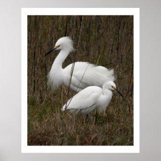 Impresión de dos del Egret de los pájaros animales