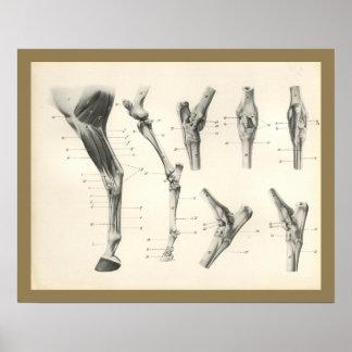 Impresión de la anatomía de las juntas de los
