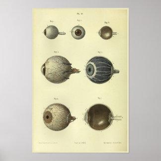 Impresión de la anatomía del ojo humano 1866