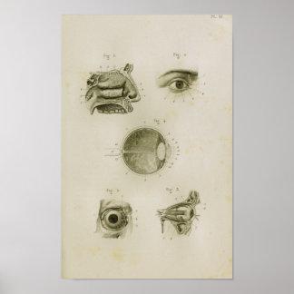 Impresión de la anatomía del vintage de Vision del