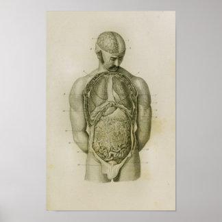 Impresión de la anatomía del vintage del cerebro