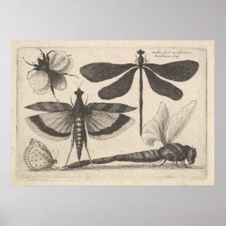 Impresión de la entomología del insecto de la
