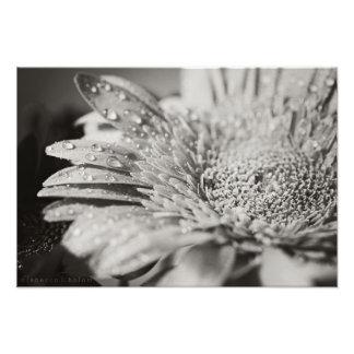 Impresión de la flor negra y blanca y de la foto