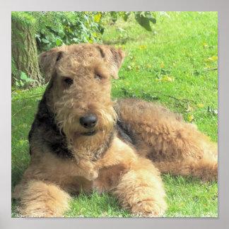 Impresión de la foto de Airedale Terrier