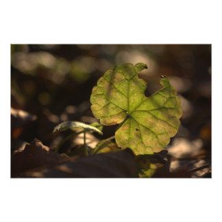 Impresión de la foto de noviembre Sun CC0305