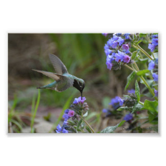 Impresión de la foto del colibrí