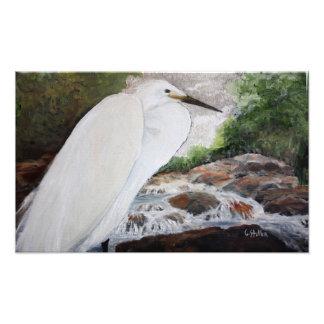 Impresión de la foto del Egret nevado
