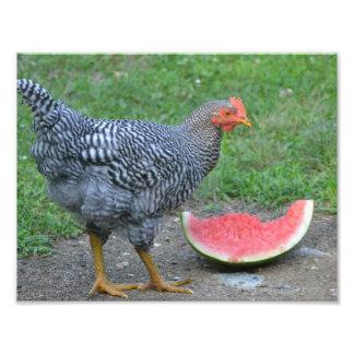 Impresión de la foto del pollo de la sandía