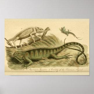 Impresión de la historia natural de la iguana del