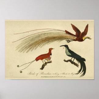 Impresión de la historia natural de las aves del