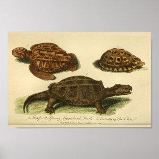 Impresión de la historia natural de las tortugas