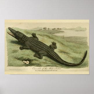 Impresión de la historia natural del cocodrilo de