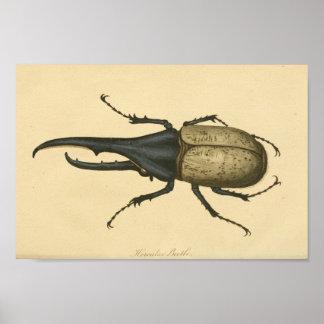 Impresión de la historia natural del escarabajo de