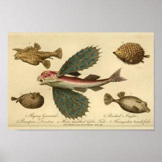 Impresión de la historia natural del pez volador