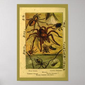 Impresión de la historia natural del Tarantula de