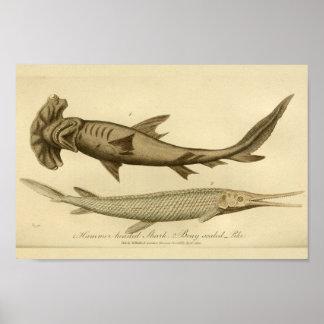 Impresión de la historia natural del tiburón de la