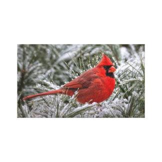 impresión de la lona 12 X12 el cardenal rojo