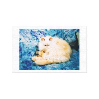 Impresión de la lona con el gato persa